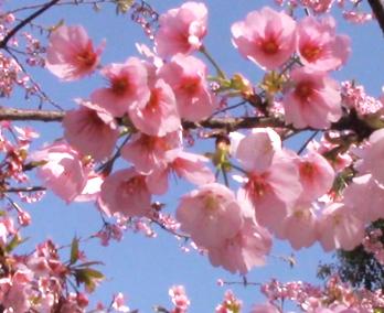 春日出游赏美景 百花争艳开满庭